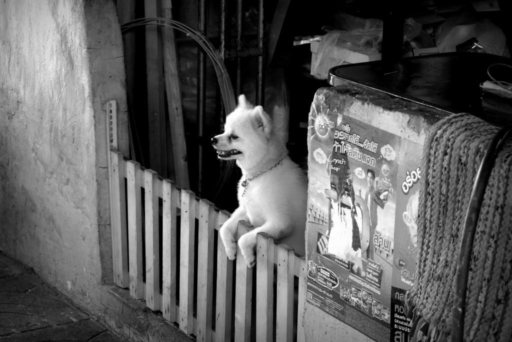 Un chien bien chanceux en Asie